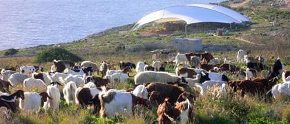 Agrar und Kultur - 8 Tage